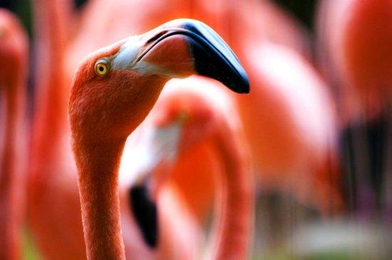flamingo hello